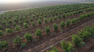 an orchard in the Jezreel Valley in Lower Galilee, July 15, 2013. Photo by Yaakov Naumi/FLASH90