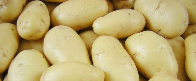 Cheap, and widely available in most countries of the world all year round, Potatoes make an ideal source of power.