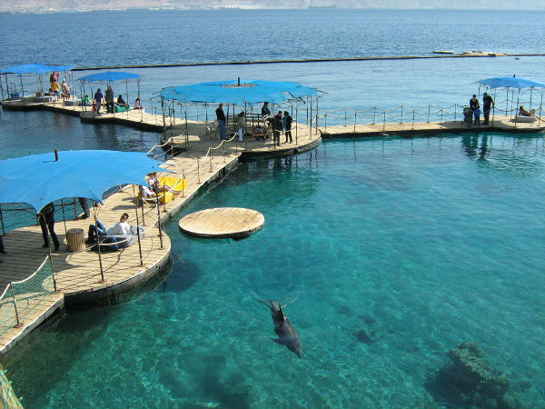 Eilat's Dolphin Reef. Photo courtesy of www.goisrael.com