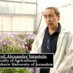 Israeli researchers bring scent back to our flowers [VIDEO]