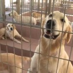 Guide dogs that speak Hebrew [Video]