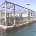 Fish farming goes urban thanks to Israeli ingenuity [VIDEO]