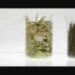 Israel's Eco Energy looks to seaweed as a super-green biofuel [VIDEO]