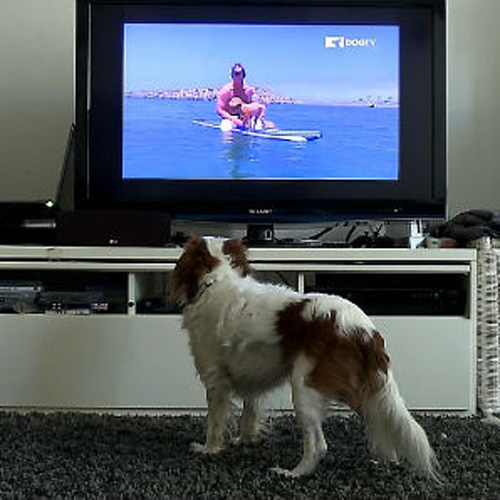 dogtv-viewer