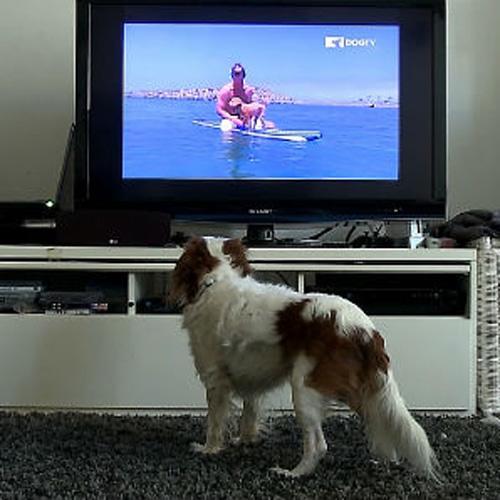dogtv-viewer