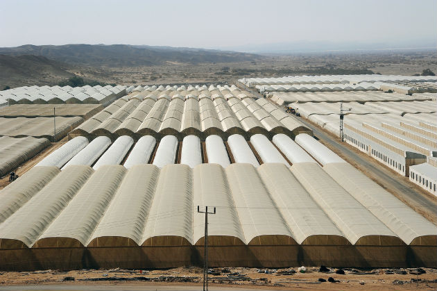 Arava greenhouses. Photo by Eyal Izhar