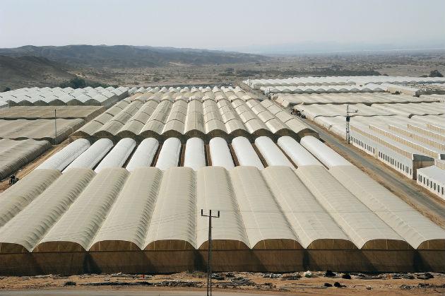 Arava greenhouses. Photo by Eyal Izhar