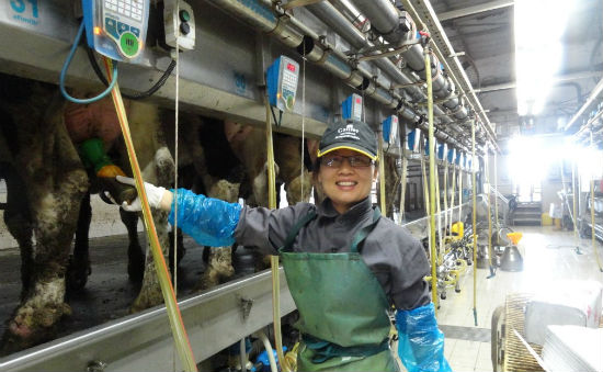 The Chinese are using Israeli systems to set up their dairy industry.