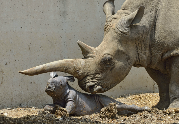 credit: Tibor Yager/Ramat Gan Safari