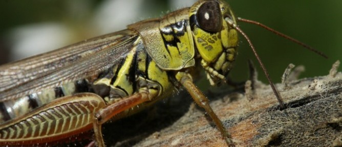 Grasshopper emotions affect the soil in which they live.