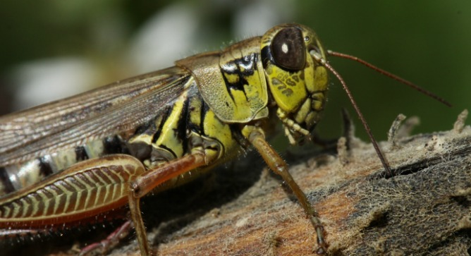 Grasshopper Anxieties Lead To Soil Changes Israel21c