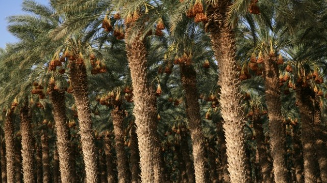 Growing Vegetables In Drought, Desert