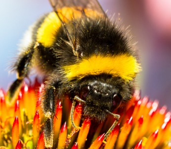 Triwaks scientists have found ways to increase effective bee pollination. Photo by www.shutterstock.com