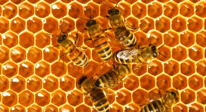 The Top 10 Things You Didn T Know About Bees Israel21c
