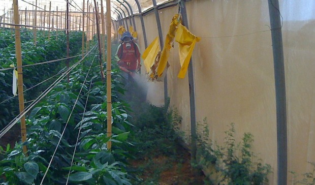 The product being applied to the anti-insect screens of an organic bell pepper greenhouse.