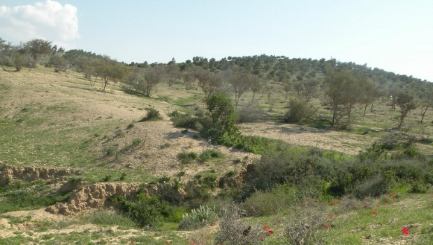 Wildflowers along the RBST route. Photo by Gal Hart/Israel Trail Committee