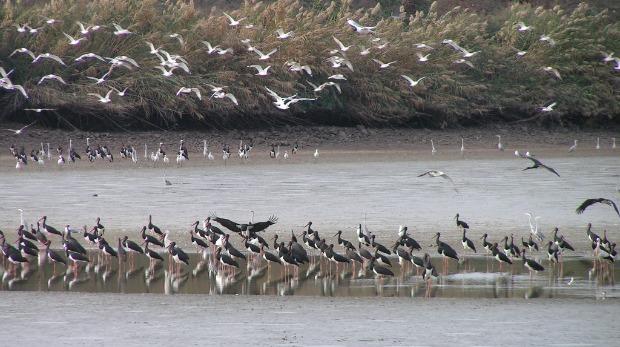 Birds over the Jordan River Valley. Photo by David Glasner/International Birdwatching Center of the Jordan Valley