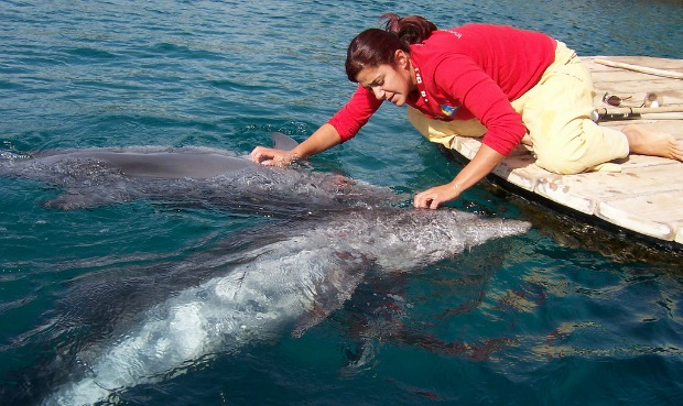 A dolphin trainer at the reef.