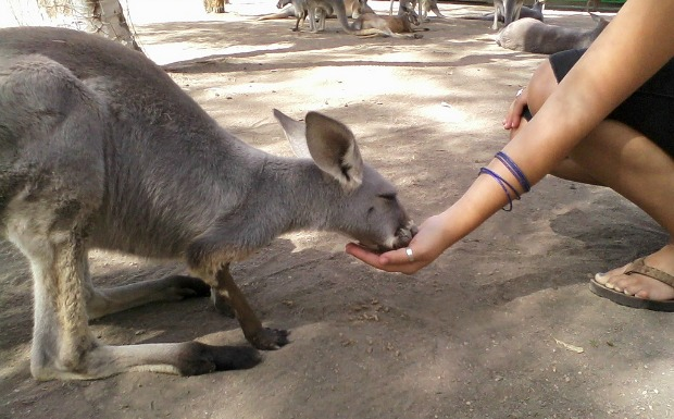 Feeding the residents at Gan Garoo.