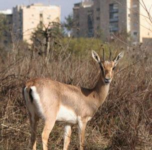 Gazelle Valley is a hard-won green expanse below Jerusalem's Givat Mordechai neighborhood. Photo by Amir Balaban.
