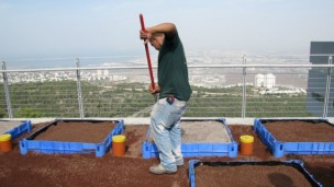 Garden with a view: Some 48 experimental modules are planted on the University of Haifa's Green Roofs Ecology Center.
