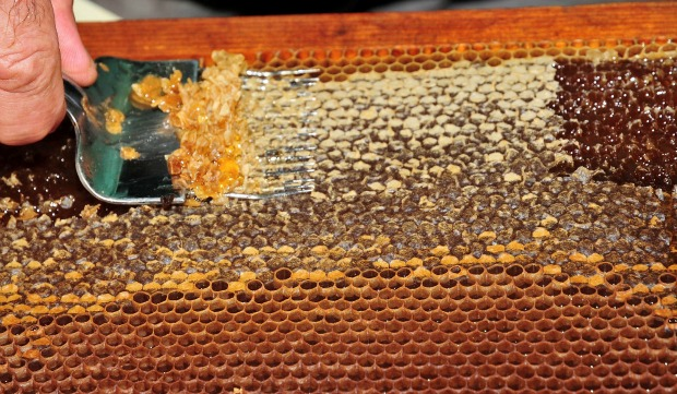 Visitors learn how bees produce honey at the Kibbutz Yad Mordechai Been and Honey House. Photo by Flash90.