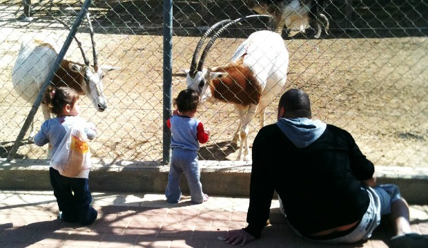 The Negev Zoo is one of the stops along the Round Beer Sheva Trail. Photo courtesy of Wikimedia Commons