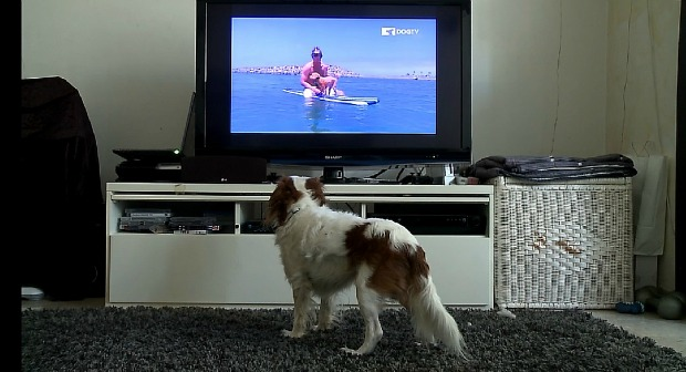 Keeping dogs entertained while their owners aren't home.