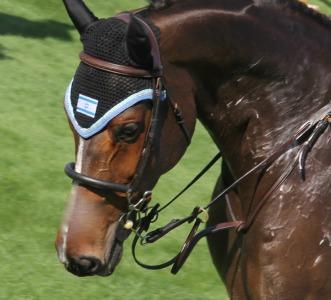 Even the horse's bonnet has an Israeli flag.