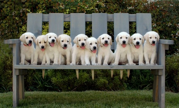 These pups are learning Hebrew to help guide their blind masters.