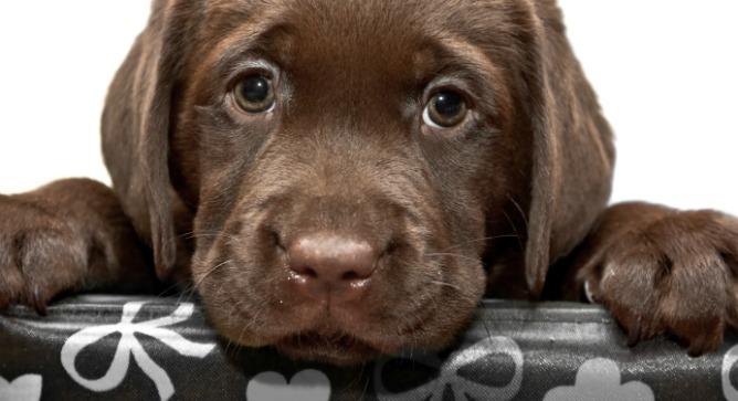 Man's best friend. Photo via Shutterstock.