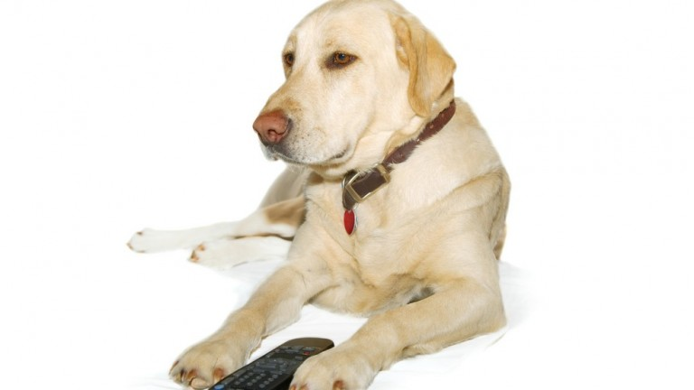 Paw on the remote: DogTV is scientifically programmed to keep pooches stimulated, happy and comforted when they're home alone. (Shutterstock)