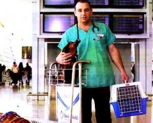 VIP pet travel