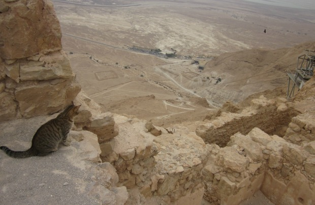 """""""The Only Cat We Saw at Masada"""" by Laura Brodie"""