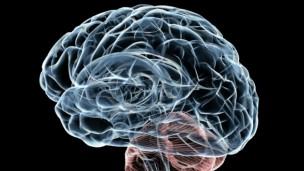 The Human Brain Project will pool information to build supercomputer models and simulations. Image via Shutterstock.com