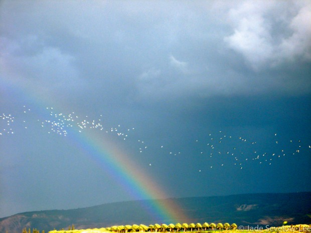 """Golan Heights Rainbow"" by Jade Sevelow"