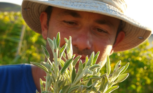 Golan Cohen gives tours of his medicinal herb farm.
