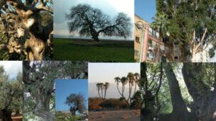 Top trees