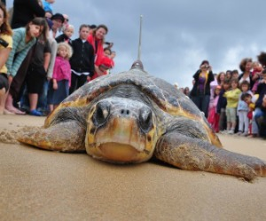 sea-turtle-viewers