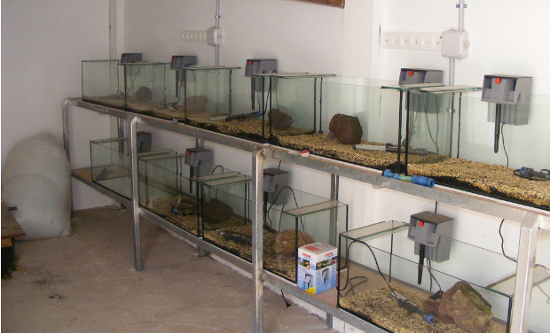 The zoo's blind prawn breeding facility.