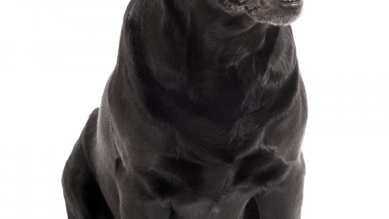 Barking Bonny (Shutterstock.com)