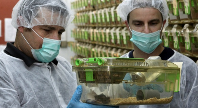 Dr. Haim Cohen, left, and Dr. Yariv Kanfi in their Bar-Ilan University lab with the famous long-lived mice. Photo by Yoni Reif