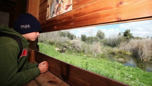 Bird-ringing at the Jerusalem Bird Observatory. Photo by Yossi Zamir/Flash90