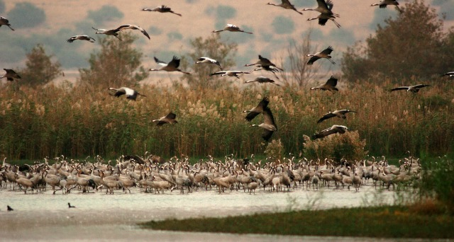 Israel's Hula Valley, a prime bird-watching spot.