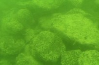 Mounds underwater