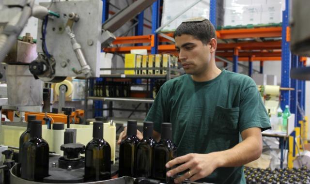Olive oil production at award-winning Meshek Achiya in Shilo. Photo by Kobi Gideon/Flash90