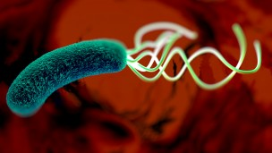 Nearly two thirds of the world's population is infected with H. pylori bacteria -- a major cause of peptic ulcers and stomach cancer. (Shutterstock)