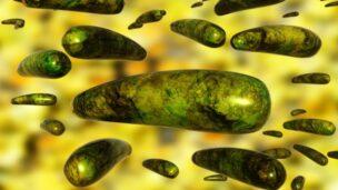 Viruses can outsmart the immune system. Image via Shutterstock.com
