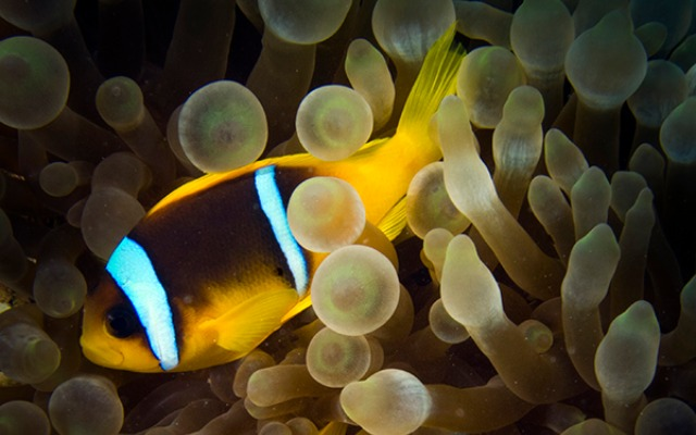 Some 800 varieties of sea life can be viewed in Eilat's waters. Photo by Shai Oron/Interuniversity Institute for Marine Sciences
