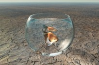 Raising decorative fish in the desert isn't such a far-fetched idea. Photo via Shutterstock.com